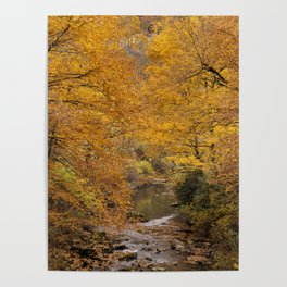 Fall is Golden Poster