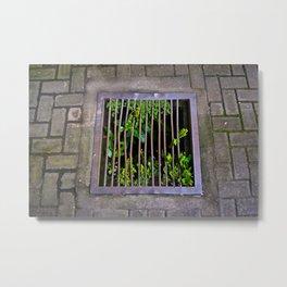 Plant Food Metal Print
