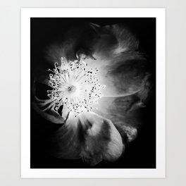 7440-22-4 Art Print