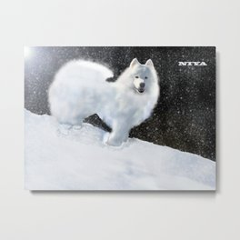 "Samoyed Portrait ""Snowy Night"" Niya Metal Print"