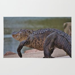 Giant Alligator Rug