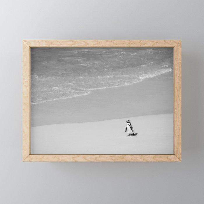 Lone African Penguin walking on beach Framed Mini Art Print
