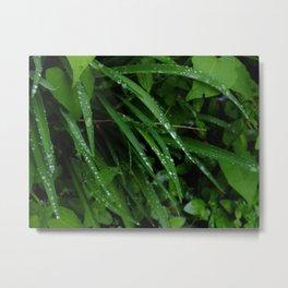 deep green dew II Metal Print