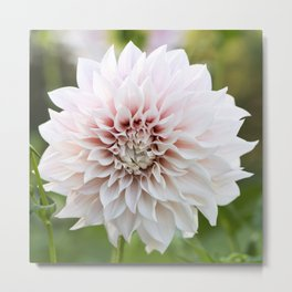 Cafe Au Lait Dahlia Buds and Bloom Metal Print