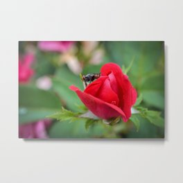 Fly on Knockout Metal Print