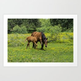 Young foal horse walking next to its mother in a field Art Print