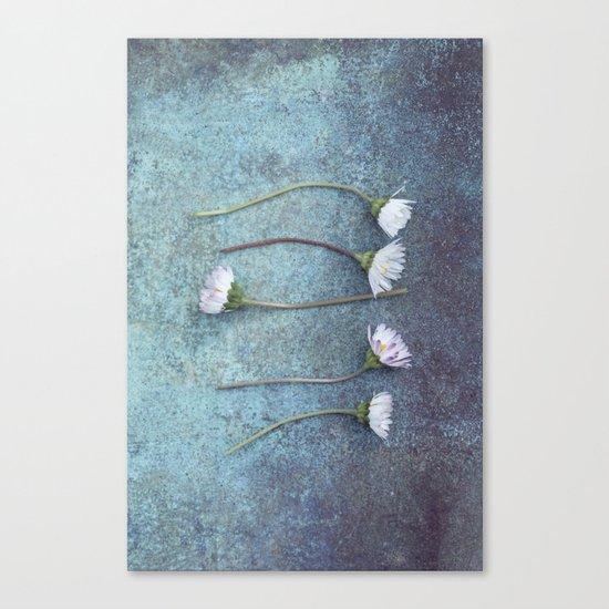 Daisies in a row Canvas Print