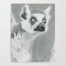 Looky-Loo Lemur Poster