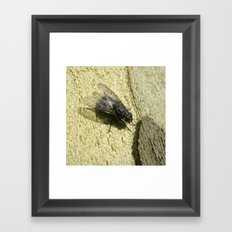 housefly macro II Framed Art Print