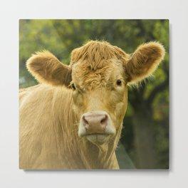 Hey Cow Metal Print