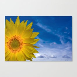 Concept Sunflower Greetingcards Canvas Print