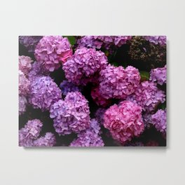 Spring Hydrangeas 4 Metal Print