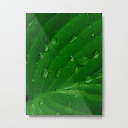 Green Leaf Macro Water Droplets Metal Print