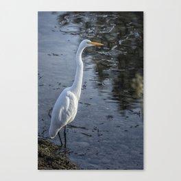 Great Egret at Delta Ponds, No. 1 Canvas Print