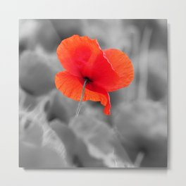 Poppy black and white photography with red splashes of color Metal Print
