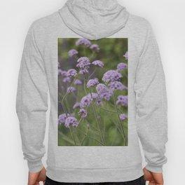 Longwood Gardens - Spring Series 159 Hoody