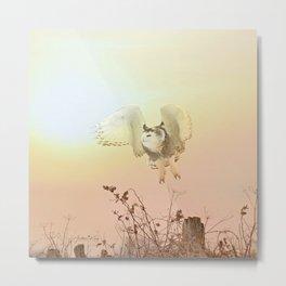 Snow owl sunset Metal Print