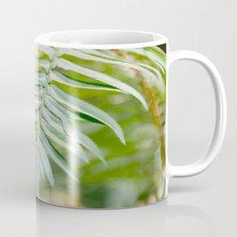 Fern Beneath the Redwoods Coffee Mug