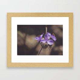 Texas Wildflower II Framed Art Print