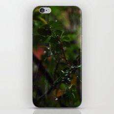 Rain // Leaves iPhone & iPod Skin