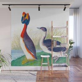 Horned Grebe John James Audubon Scientific Illustration Birds Of America Drawings Wall Mural