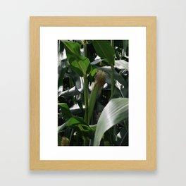 Corn Field on Northern Japanese Farm Framed Art Print