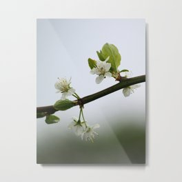 Victoria Plum Blossom Metal Print