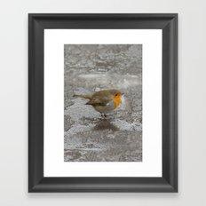 Robin on Ice Framed Art Print