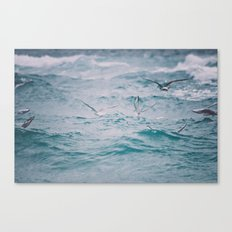 just us gulls - seagull photography Canvas Print