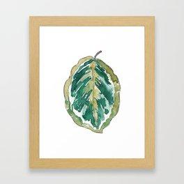 Calathea Leaf Framed Art Print