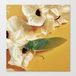 Friendly Green Cicada Canvas Print