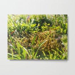Sun, Grass and Funky Moss Metal Print