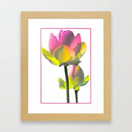 Lotus Blossom Framed Art Print