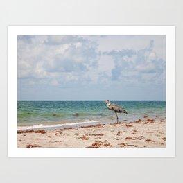 Heron Sand and Surf Art Print