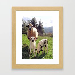 Ewe and Twin Spring Lambs Framed Art Print
