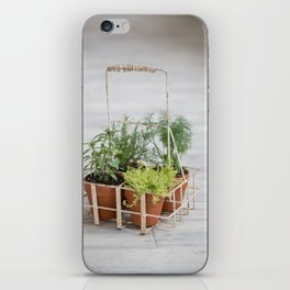 Potted Herbs on Gray Backdrop iPhone Skin