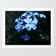 Flowers #1 Art Print