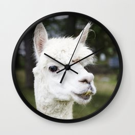 A llama peers at a passerby from its copse on a farm near Plato in LaGrange County Indiana Wall Clock