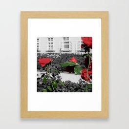 Roses, Color on B/W 3 Framed Art Print