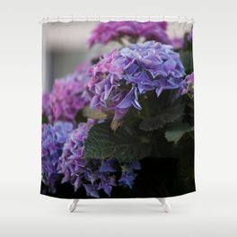 Big Hortensia flowers in front of a window Shower Curtain