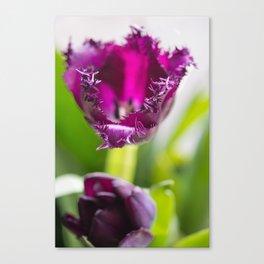 Tulip Lace Canvas Print