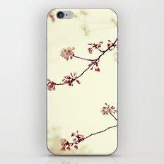 Spring Symphony iPhone & iPod Skin
