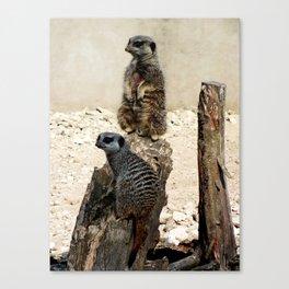 Meerkat Duo Canvas Print