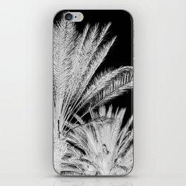Palm Trees B&W iPhone Skin