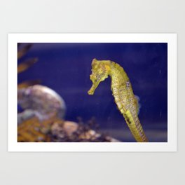 Sea Horse Photo Art Print