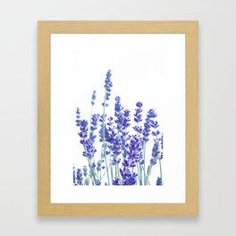 Fresh Lavender #3 #decor #art #society6 Framed Art Print