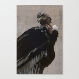 Andean Condor Canvas Print