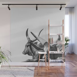 Animal Photography | Ankole-Watusi | Cattle | Bull | Steer | Black and White Wall Mural
