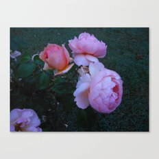 Roses in the Mist Canvas Print