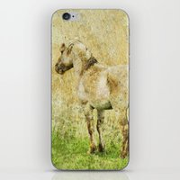 pony iPhone & iPod Skins featuring pony by URS|foto+art